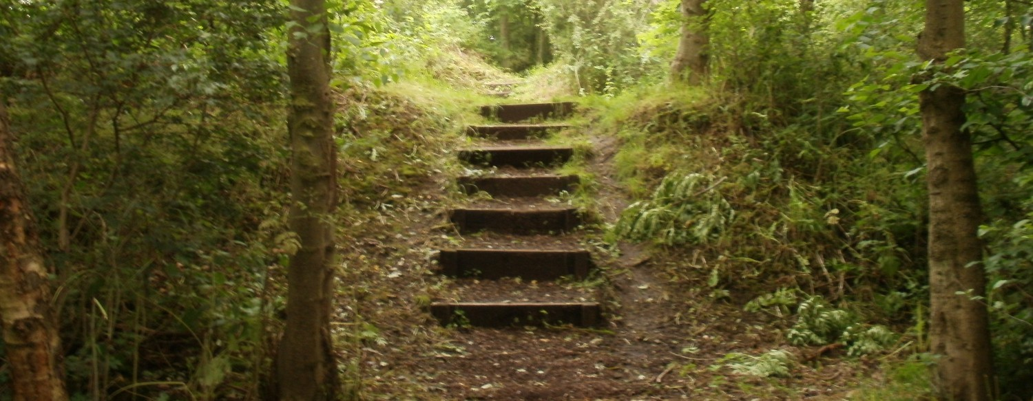cropped-steps_in_windy_nook_nature_reserve2.jpg